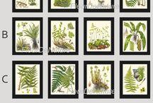 Bitkiler-Plants