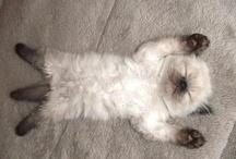 Too cute! / by Tim Amanda Gary