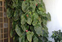 Jardinagem ideias plantas flores hortas / Jardins, plantas em vasos, ideias para paisagismo e hortas em casa