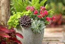Potted Pleasure / Outdoor decor to add vitality to your mouth of Ch'i or porch, veranda, side door, patio or garden. Draw in the goodness of what is green, beautiful, blooming and bright.