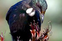 New Zealand Fauna