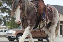 Konie dzikie konie.
