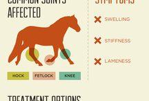 Horse Veterinary & more