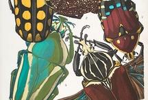 Buggy Bug World