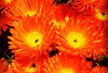 orange / I love orange