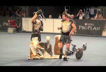 doggy dance / leuke sport, samen met je hond dansen.... heerlijk! Nice, dancing with your dog! Lots of fun that is!