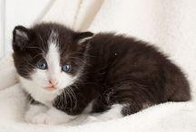 Kittens / Haal kittens niet te jong uit het nest!