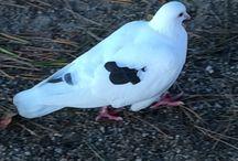 Bird / 鳥