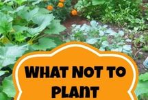 How does your garden grow? / by Carrie Hormel