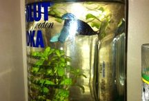 plants and fish / decorating with plants and beta fish