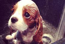 Σκυλί που κάνει μπάνιο