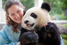 Freiwilligenarbeit Tier- und Naturschutz / Infos zur Freiwilligenarbeit in Südafrika, China, Indonesien, Thailand, Sri Lanka.
