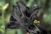 Goth Plants