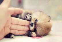 Cute!!!  :) / by Maria Martinez