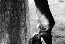 horses / by Katelynn Waddell
