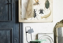 studio / by Olga Sugden