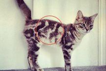 Cats, cats & more cats... <3