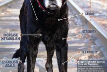 Adopt A Senior Dog Month / November is Adopt A Senior Dog Month