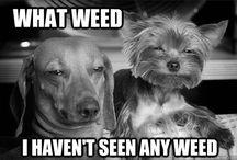 Weed<3