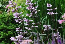 garden plants and combinations