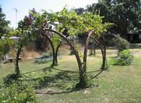 Garden Structures / Structures to grow plants on or to add interest to your garden.