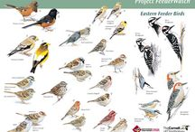 Backyard Birding with Kids / A collection of resources and ideas for exploring backyard birding with children. Chock full of relevant books, field guides, and plenty of hands on activities. Have pin suggestions? Send them to regina@chalkinmypocket.com