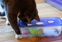 bricolage pour chat