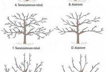 copaci și tăieri de întreținere