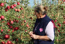 France harvest