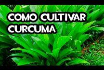 Plantas Aromaticas / Todo sobre cultivo de plantas aromáticas y medicinales, trucos para evitar tomar tantos medicamentos y sanar de una forma mas natural.