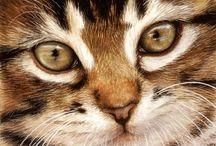 Peintre (Tracy Hall) / Portraits d'animaux, aquarelles de fleurs