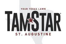 TamStar