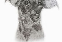 For you / If you are pet lover maybe would you like to ordet pencil drawing portrait of your beloved pet :)