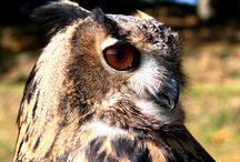 Owls, Owls, Owls / Owls :)