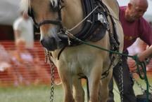 •Horses•
