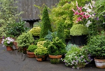 Evergreens in containers