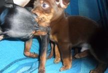 puppies / My little precious