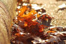 Autumn~<>