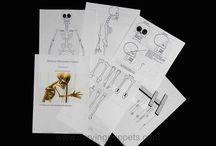 marionete skeleton