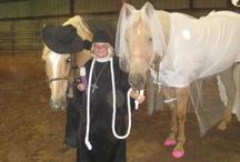 Pferde Kostüme