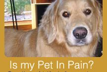 Quality of Life Information / Your beloved pet will always show you their best face, regardless of their pain or disease. Evaluating your pet should be considered on a timeline. Just as you watch children grow, they grow every day but we measure that grow in increments of time.