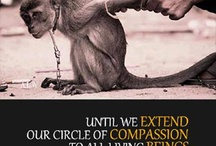Animal Rights / by Animals Voice