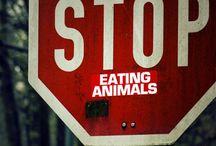 Dennis (vegan food & other healthy stuff) / by Debra O'Regan
