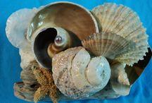 Seashell Art / Seashell art that I made myself.