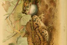Herpetology art