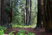 SanFran/Redwoods / by Allison Henderson