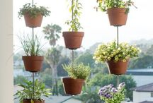 Gardening / Plants, Veggies - all that you can have in your home or balcony.