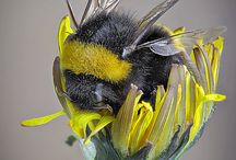 Bees _ Hardworking kids of nature