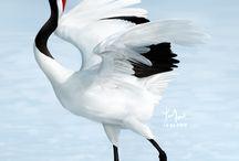Cranes & egrets