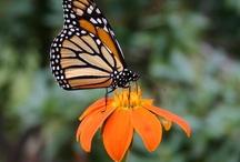 Learn About Butterflies